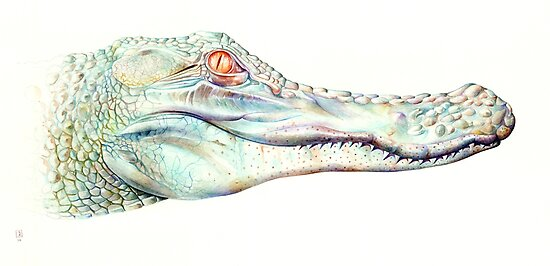 Albino Alligator by Brandon Keehner