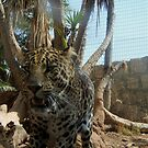 Leopard by AngelaClaire