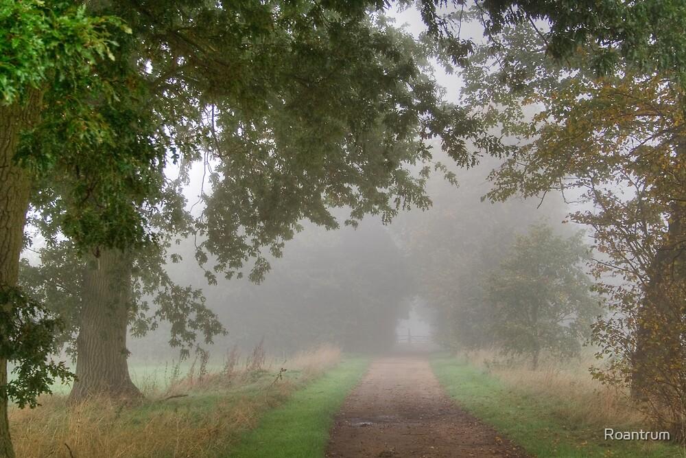Misty Track by Roantrum