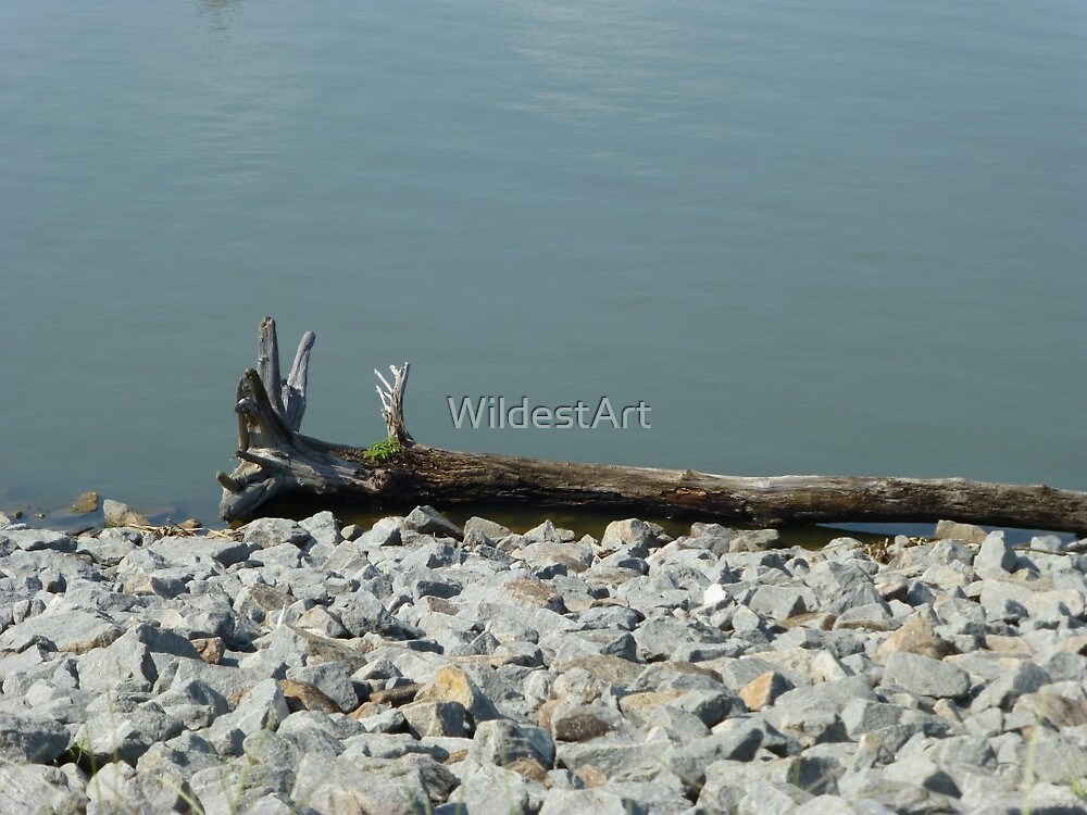 Driftwood On The River by WildestArt