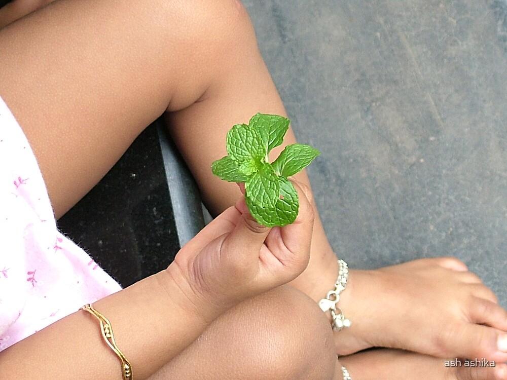 mint leaves by ash ashika