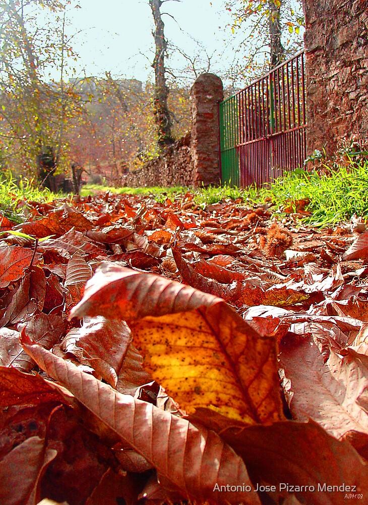 Leaves on the road by Antonio Jose Pizarro Mendez