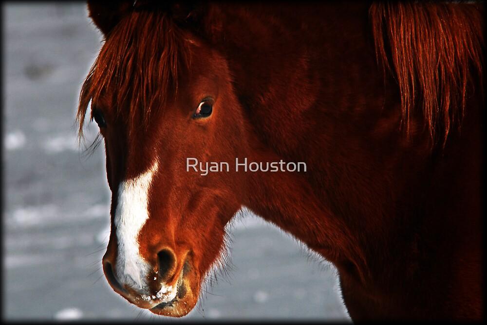 Last Light by Ryan Houston