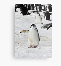 "Chinstrap Penguin  ~  ""Traffic Cop on Point Duty"" Metal Print"