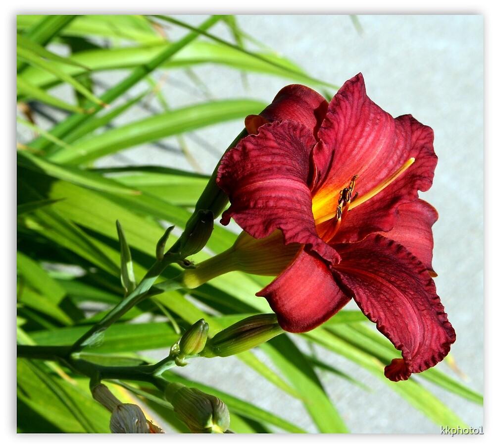 Lovely Lily by kkphoto1