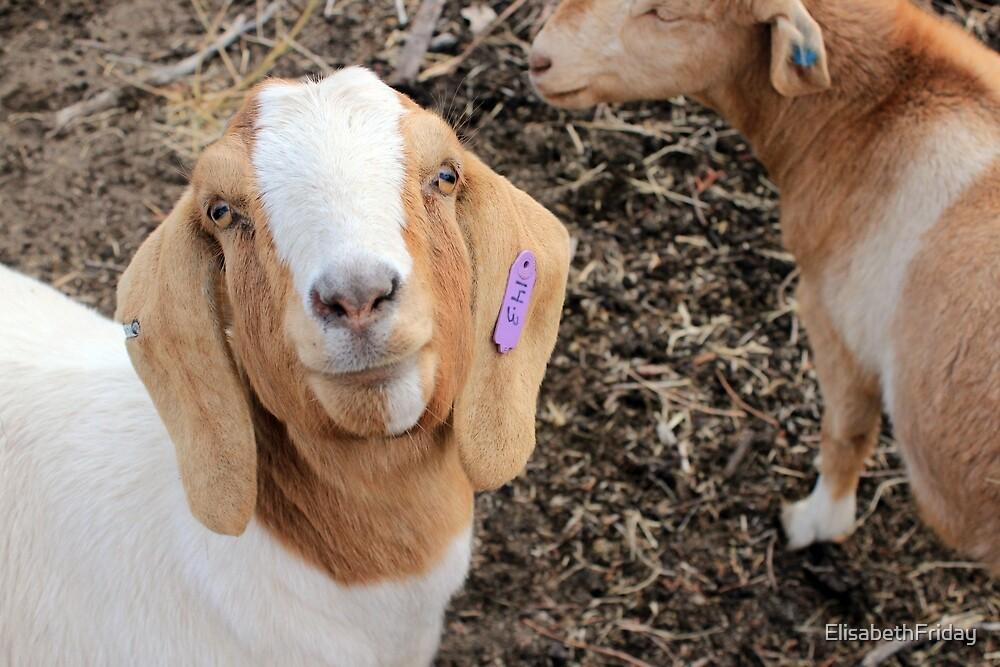 Daphne The Goat by ElisabethFriday