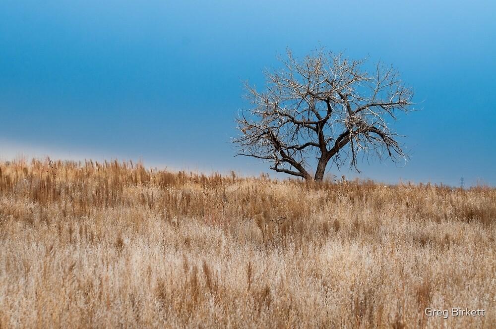Grasslands by Greg Birkett
