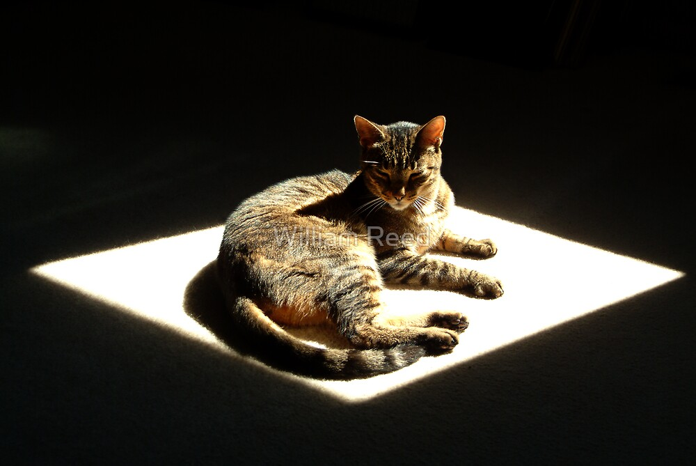 Gary in a patch of sunlight by William Reed