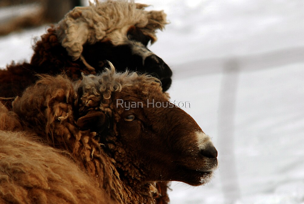 Wooly by Ryan Houston