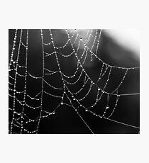 Weathered web Photographic Print