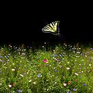 Wildflowers and Swallowtail Butterfly by Elaine Bawden