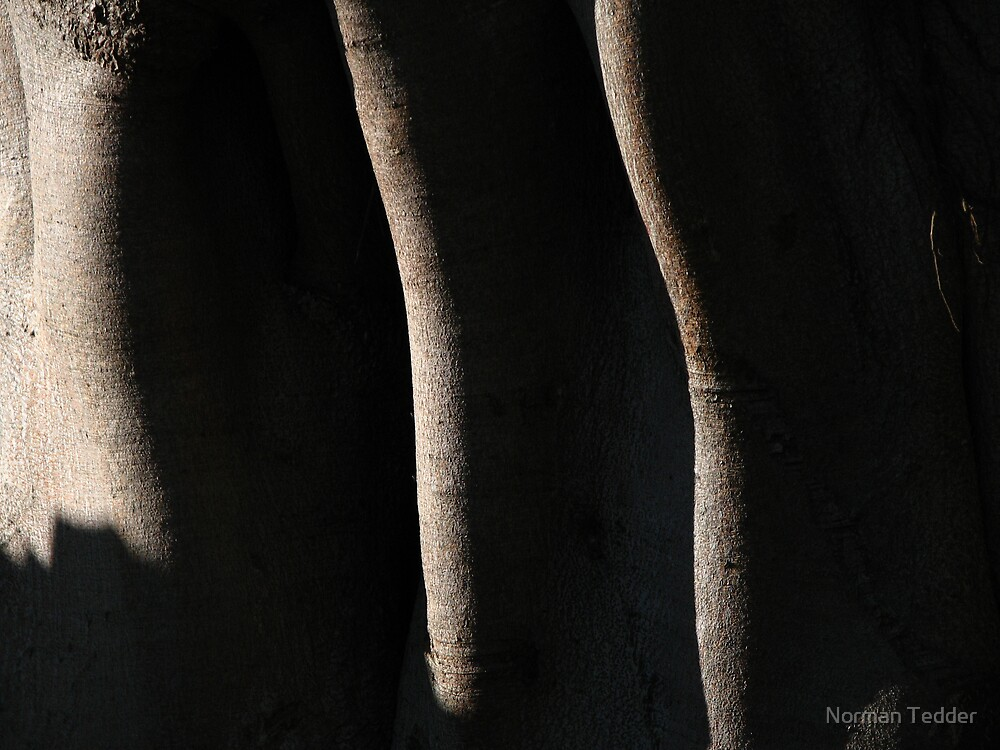 Fig tree abstract by Norman Tedder