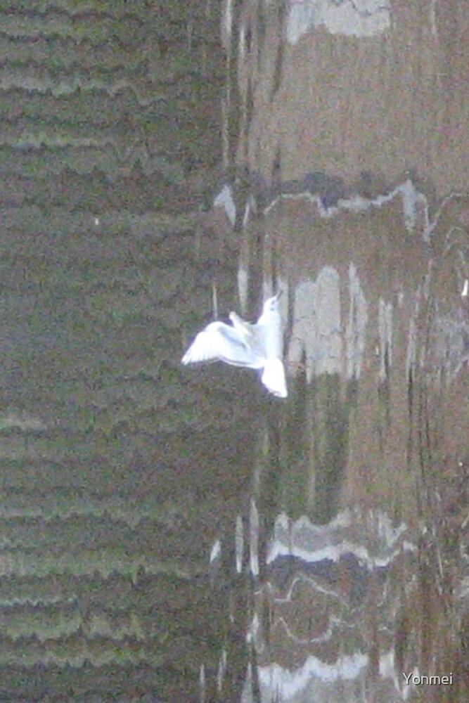 Dream of a gull by Yonmei