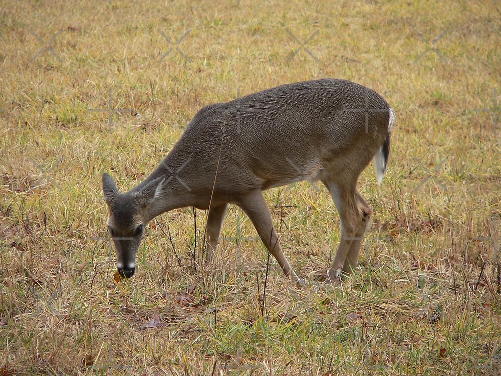 Single Deer by kevint