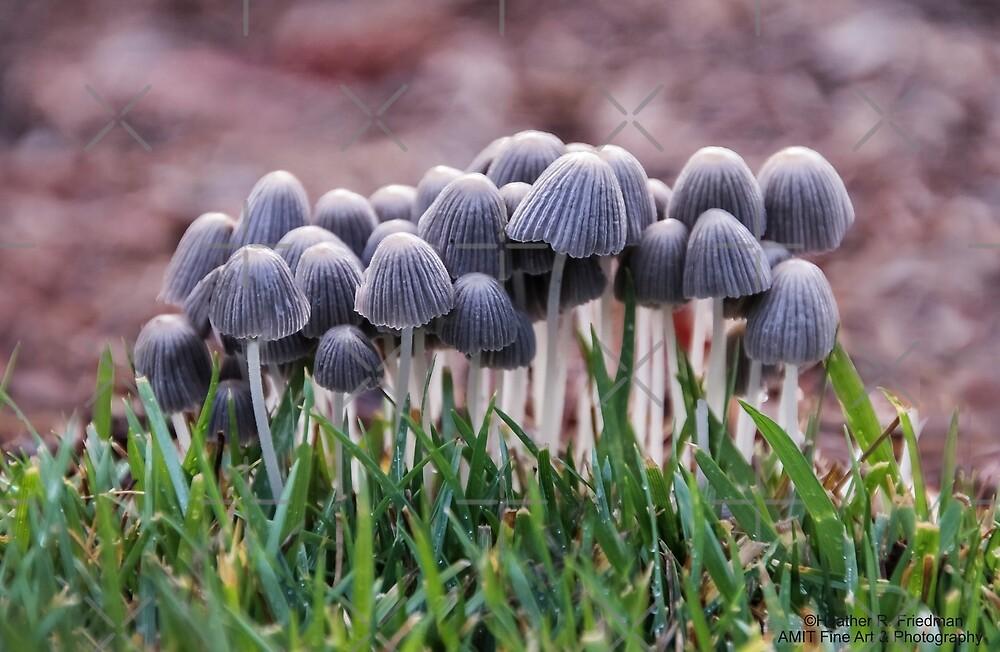 'Shroom Group by Heather Friedman