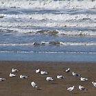 Sea, sand and seagulls!  by Margaret Stanton