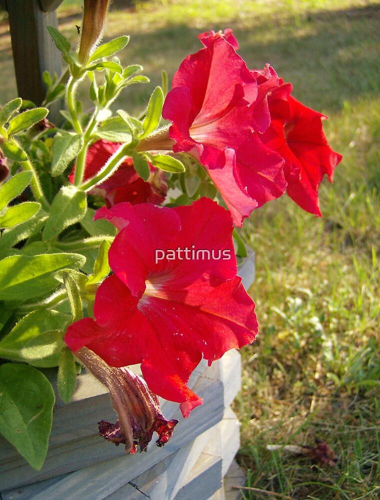 Petunia by pattimus