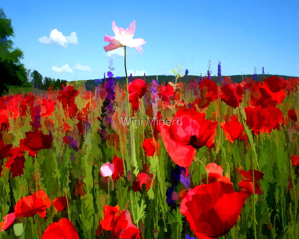 Rocky Gap Poppies by Wini Minerd