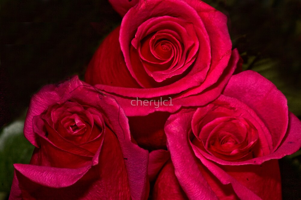Roses In Three by cherylc1