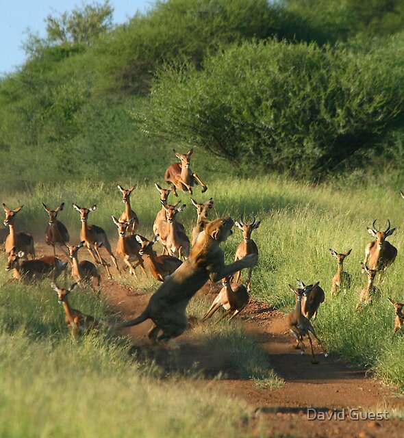 Time to eat!!! by David Guest