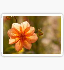 Sunny Dahlia Sticker