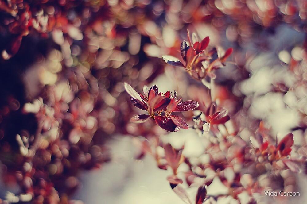 creamy taste of autumn by Vida Carson