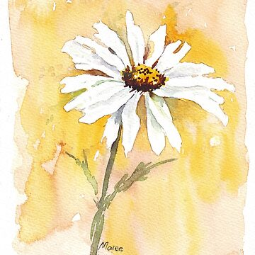 One perfect daisy by MareeClarkson