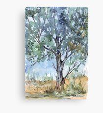 This Bluegum - I think she's wonderful Canvas Print