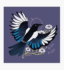 Familiar - European Magpie Photographic Print