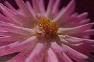 Beautiful Pink Dahlia Textured Romance by Joy Watson