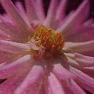 Beautiful Pink Dahlia Textured Romance by Joy Watson
