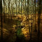 Forest Stream by John Hill