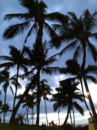 Palm Tree Silhouette  by ashblacher