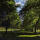 Avenue of trees by Avril Harris