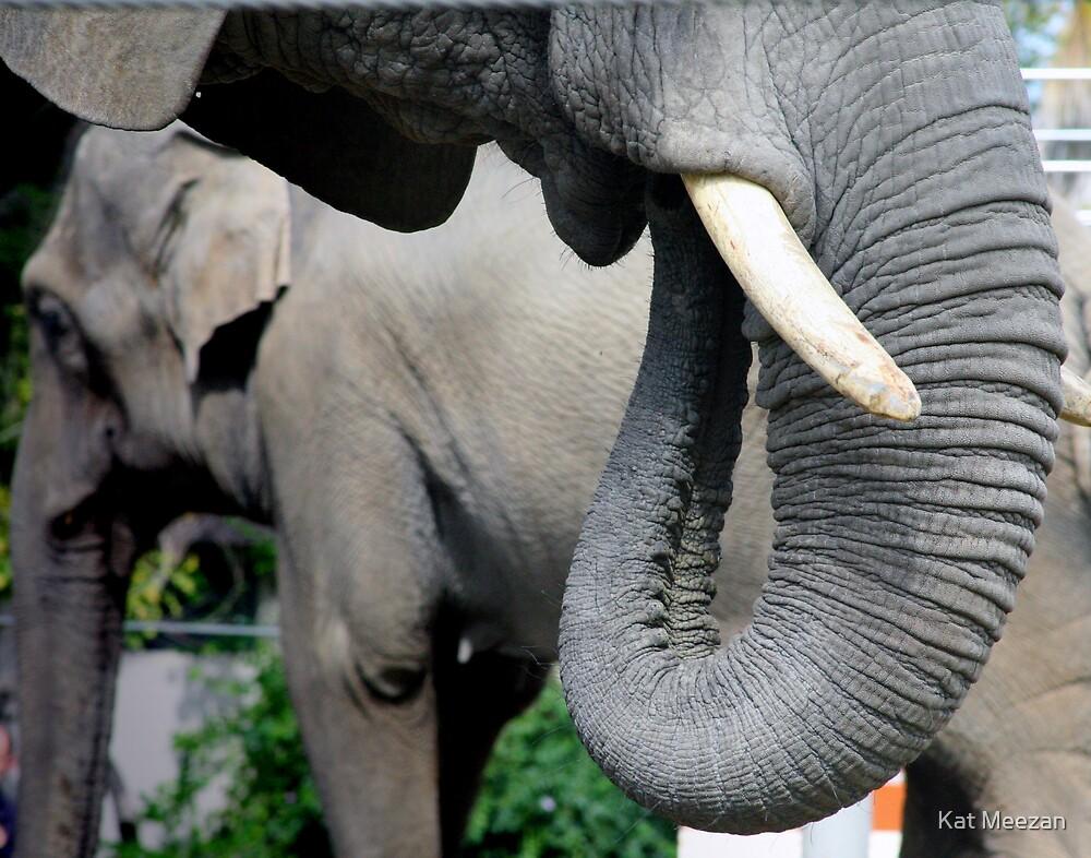 Elephant Trunk 2 by Kat Meezan