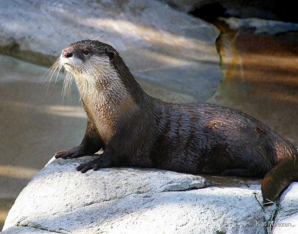 Otter by Kat Meezan