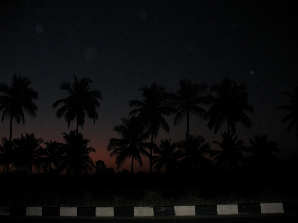 Trees without light by Harshit Khetan