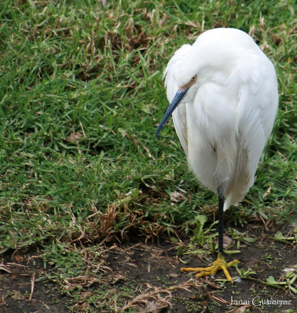 white birdie by Janaigee