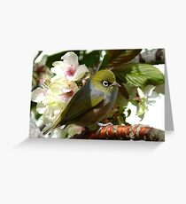 I'm waiting for my bride! - Silvereye - NZ Greeting Card
