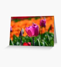 A Little Pink to add more Colour! - Tulip Plantation - NZ Greeting Card