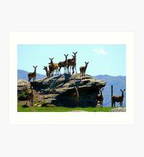 The Vantage Point! - Deer - NZ Art Print