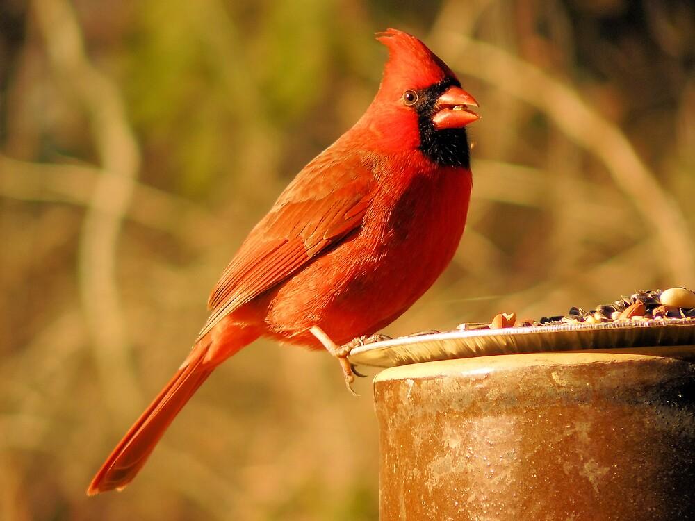 Male Cardinal by JusJane