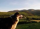 Laddie in Landscape. by Michael Haslam