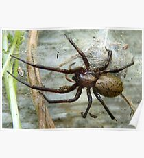 Guarding The Nest! - Massive Spider - NZ Poster