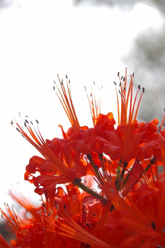 Flower in Sun by Deidre Cripwell