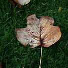 Fall of the Leaf Melancholia by patjila
