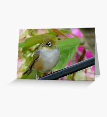 Perfection - Harmony With Nature - Silver-eye - NZ Greeting Card