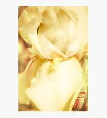Heavens Scent Photographic Print