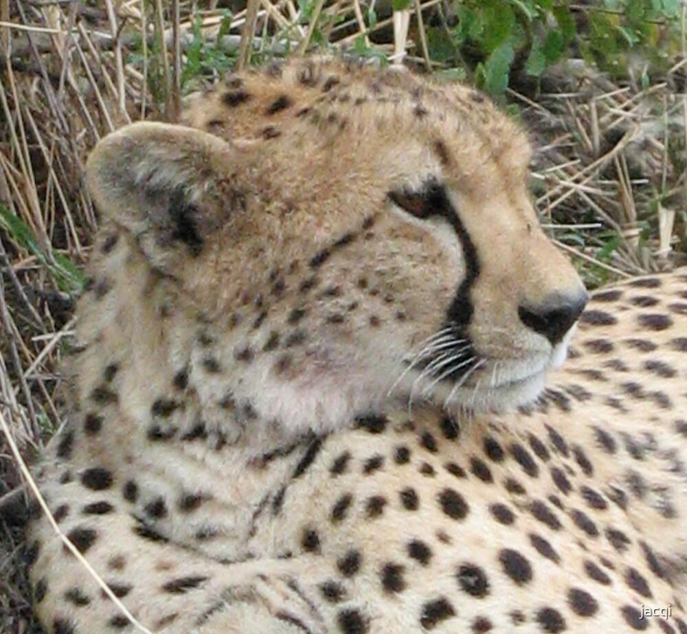 Cheetah Face by jacqi