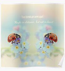 Ladybird friendship Poster